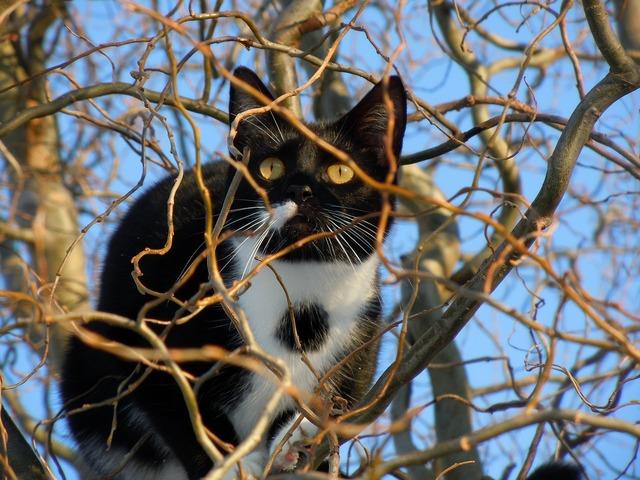 Cat hidden animal, animals.