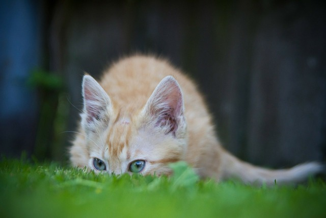 Cat hiding grass, animals.
