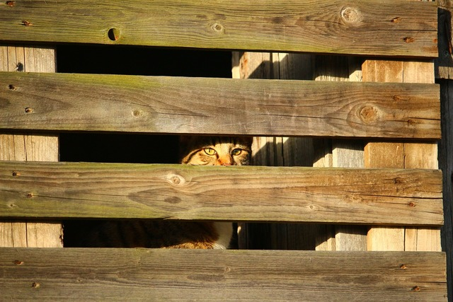 Cat hiding place wooden wall, animals.