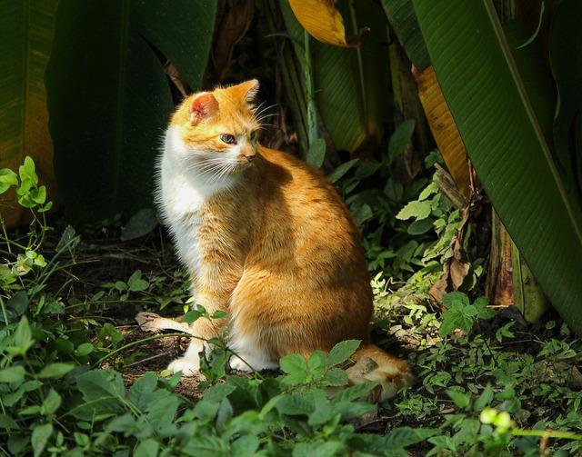 Cat housecat domestic cat, animals.