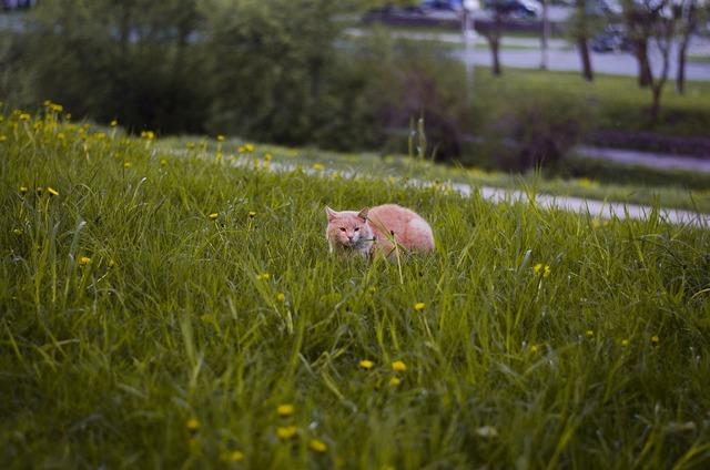 Cat in grass dandelions cat, animals.