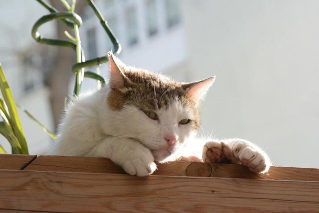 Cat istanbul tabby cat, animals.