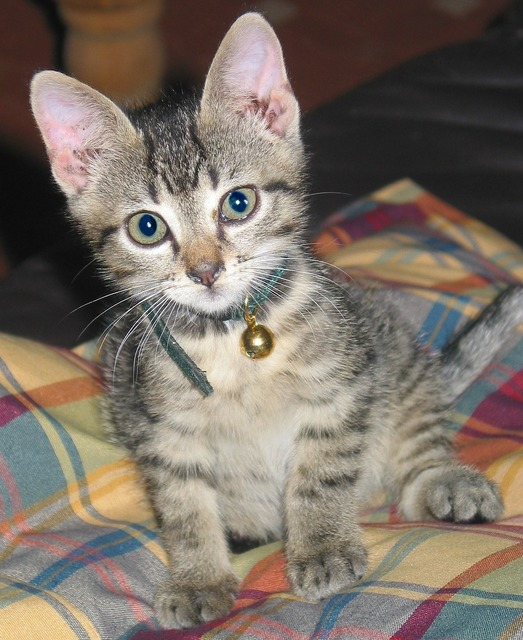 Cat kitten cat baby, animals.