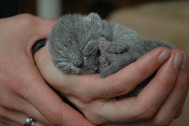 Cat kitten cats, animals.