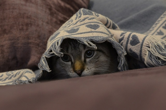Cat kitten cute, animals.
