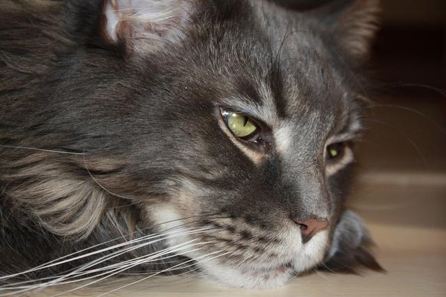 Cat kitten domestic cat, animals.