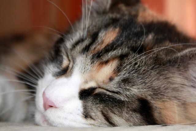 Cat kitten futrzak, animals.