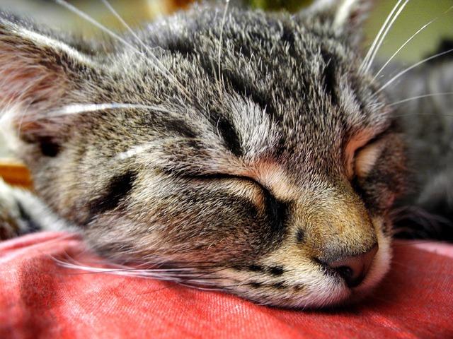 Cat kitten head, animals.