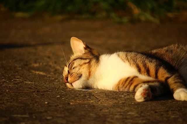 Cat kitten mackerel, animals.