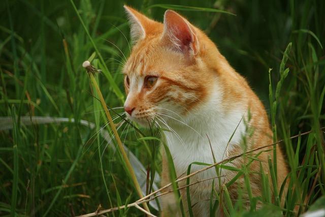 Cat kitten mieze, animals.