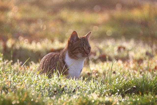 Cat kitten morgentau, animals.