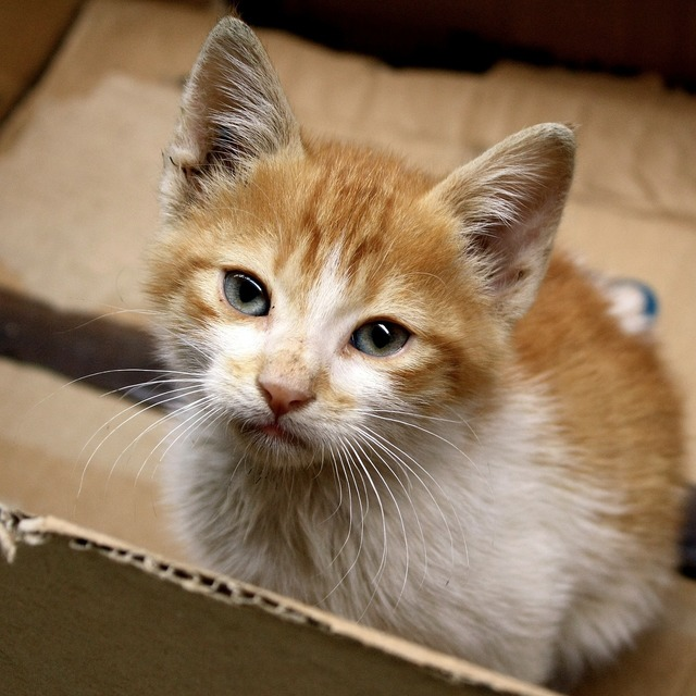 Cat kitten morocco, animals.