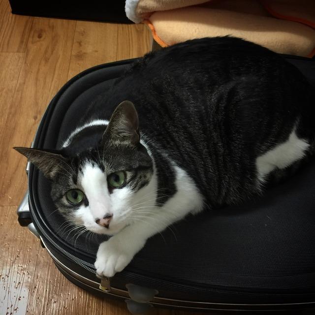 Cat kitten pong pong, animals.