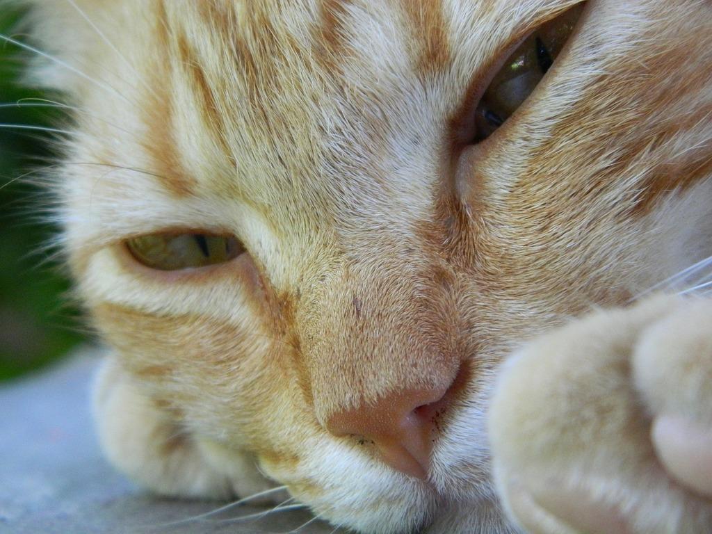 Cat kitten pussycat, animals.