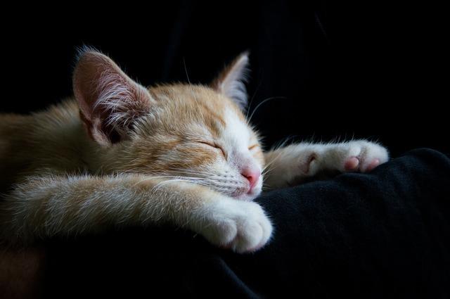 Cat kitten sleep, animals.