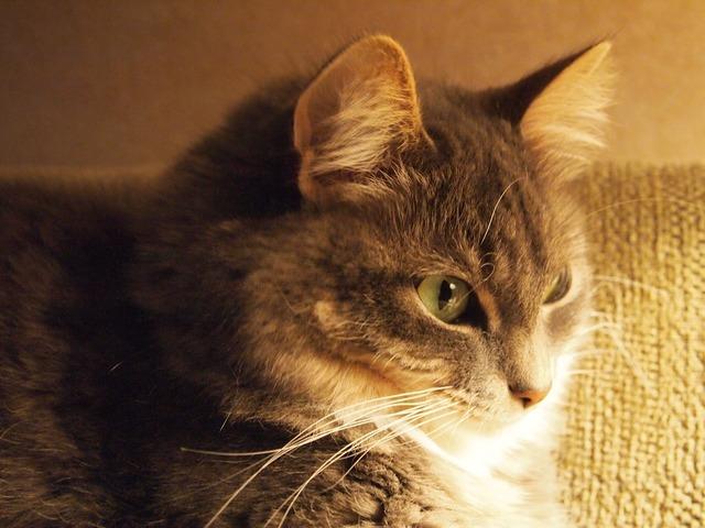 Cat kitten whiskers, animals.
