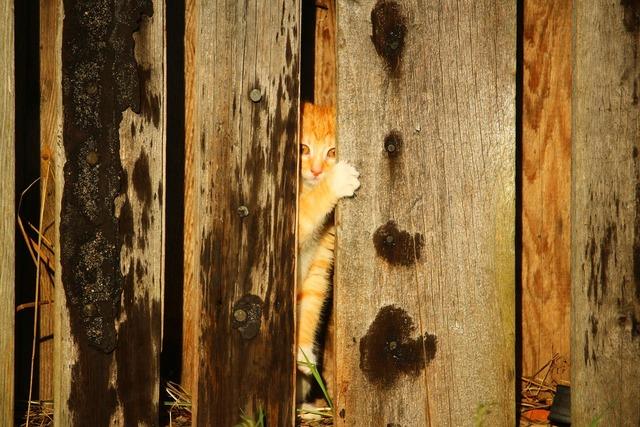 Cat kitten wooden wall, animals.