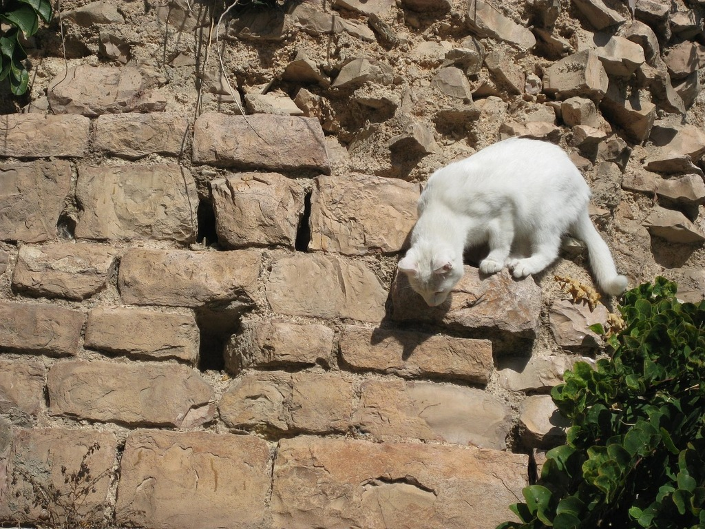 Cat kitty cute, animals.