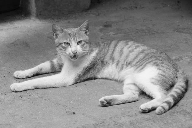 Cat kitty small fresh, animals.