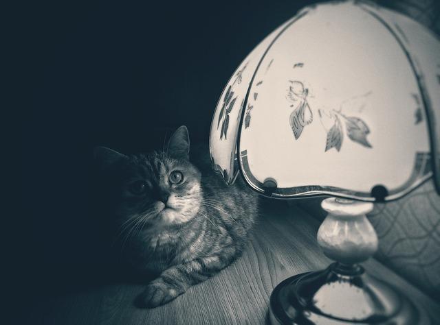 Cat lamp noir, animals.