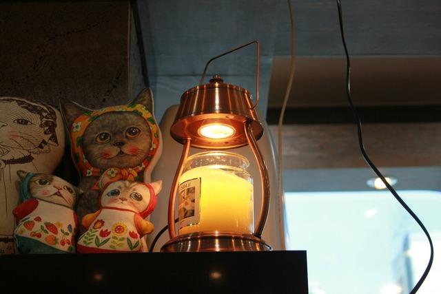 Cat lantern bright, animals.