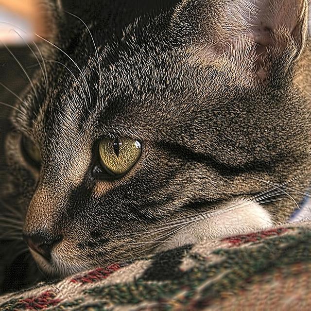 Cat mackeral adorable, animals.