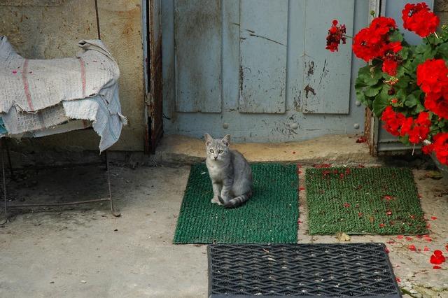 Cat mackerel geranium, animals.