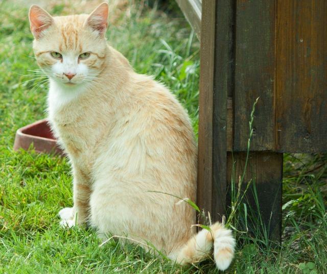 Cat mammal pet, animals.