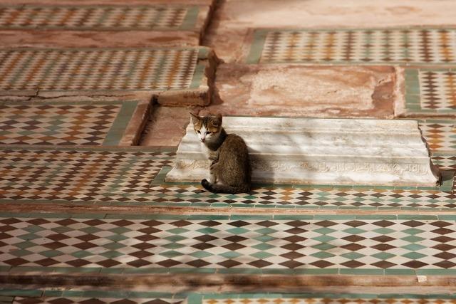Cat mosaic morocco, animals.