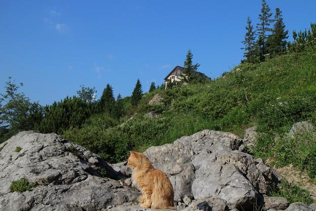 Cat mountains hut, animals.