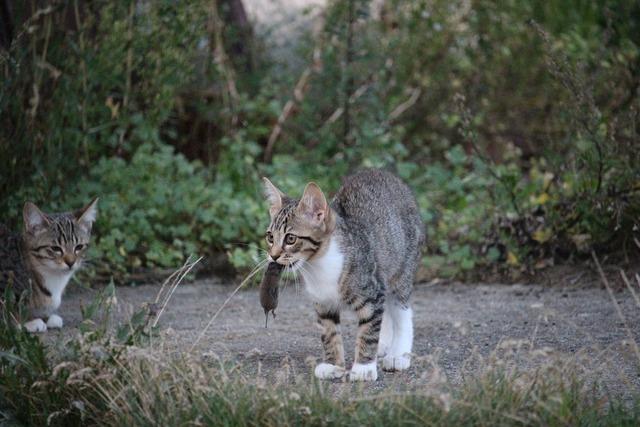 Cat mousehunt film pinch, animals.