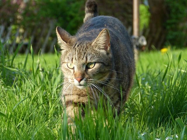 Cat nature grass, animals.
