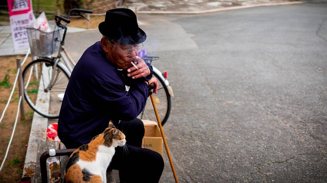Cat old man peaceful, animals.