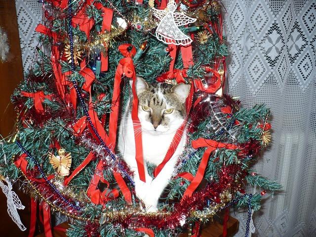 Cat ornament christmas, animals.
