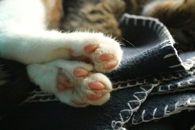 Cat paws kitten, animals.