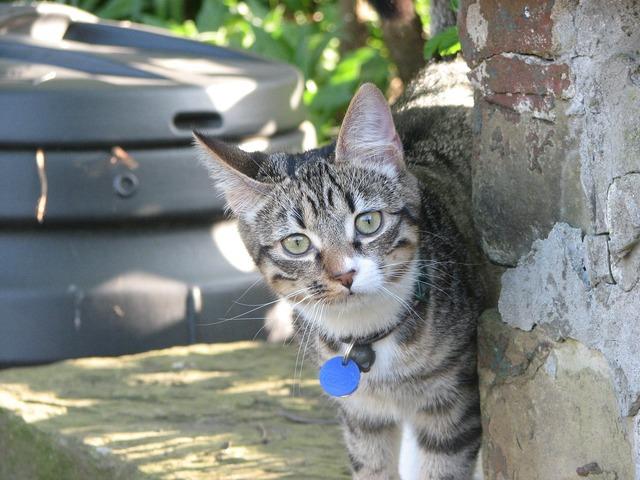 Cat pet cute, animals.