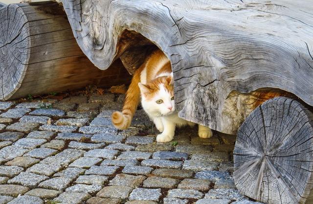 Cat pets bank, animals.