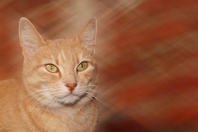Cat portrait close, animals.