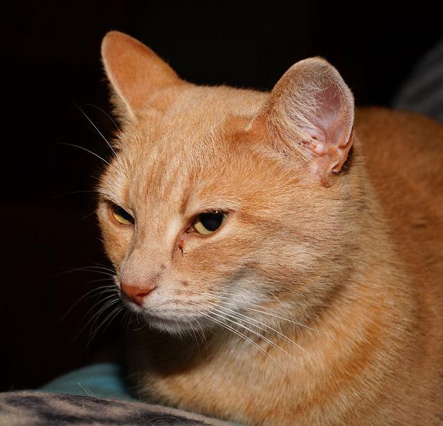 Cat portrait graceful, animals.