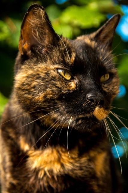 Cat portrait pet, animals.