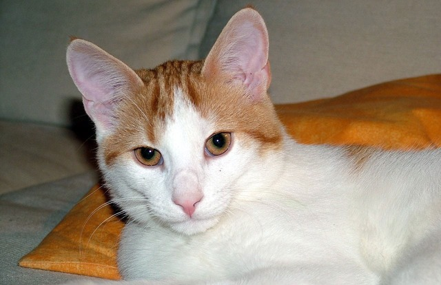 Cat profile skin, animals.