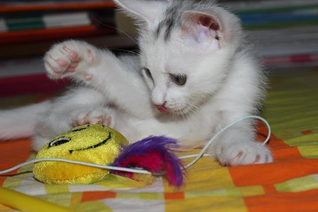 Cat puppy toy, animals.