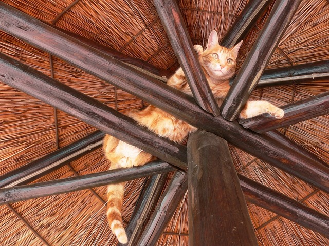 Cat rafters play, animals.