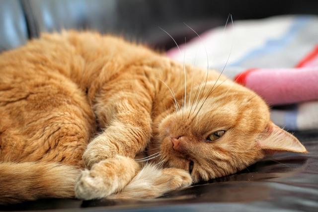 Cat red cat kitten, animals.