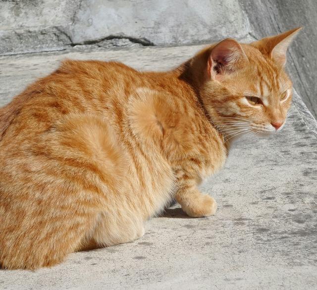Cat red concrete, animals.