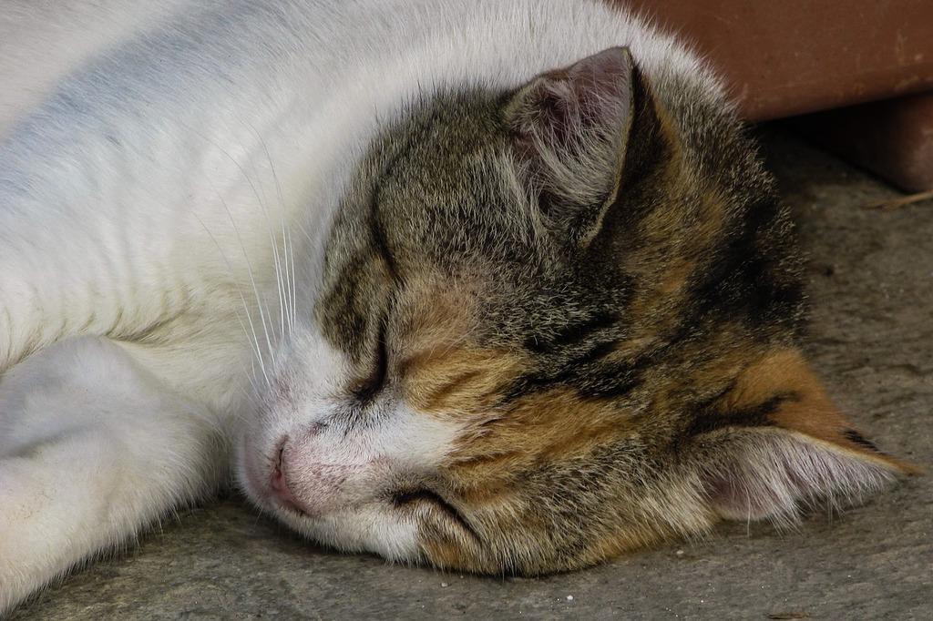 Cat resting cute, animals.