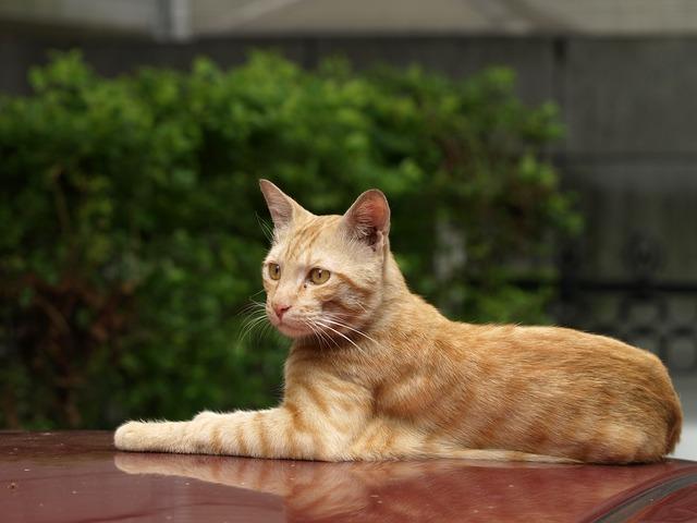Cat roof rest, animals.