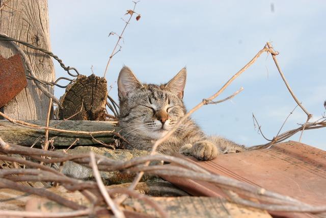 Cat roof shingle, animals.