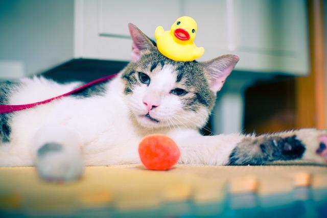 Cat rubber duck duck, animals.