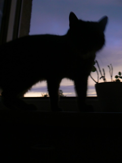 Cat silhouette shadow, animals.